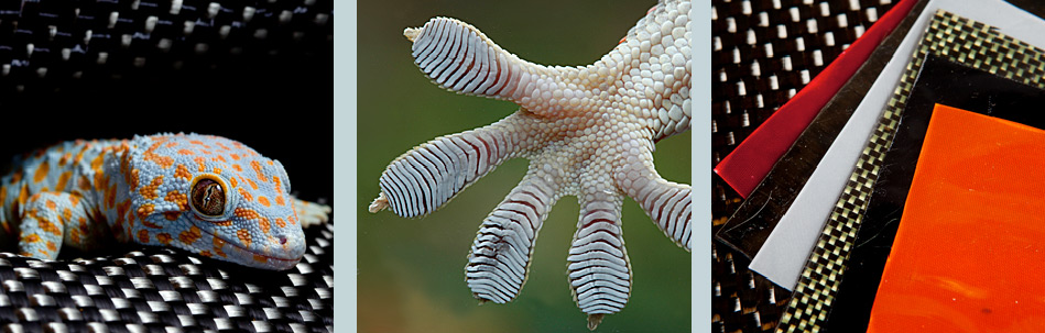 Gecko, foot, and Geckskin™ fabric